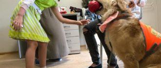 Реабилитация ребенка-инвалида с участием обученной собаки - в Волгограде реализуют идею