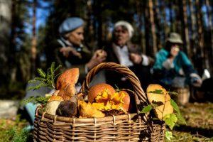 Россияне смогут собирать грибы и ягоды без ограничений: кого коснутся новые правила