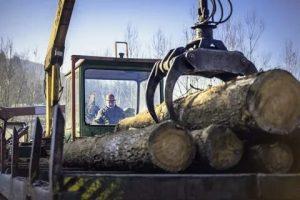 В России введут пошлину на экспорт необработанной древесины: к чему это приведёт