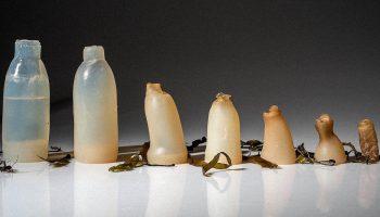 Маразм или гениальная идея? Оплатить продукты можно будет пустыми бутылками